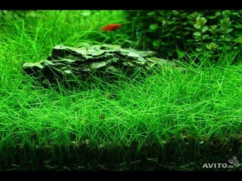 Аквариумный огород (День 1)