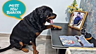 Jerry is missing bhaiya   emotional dog video   dog missing his owner  