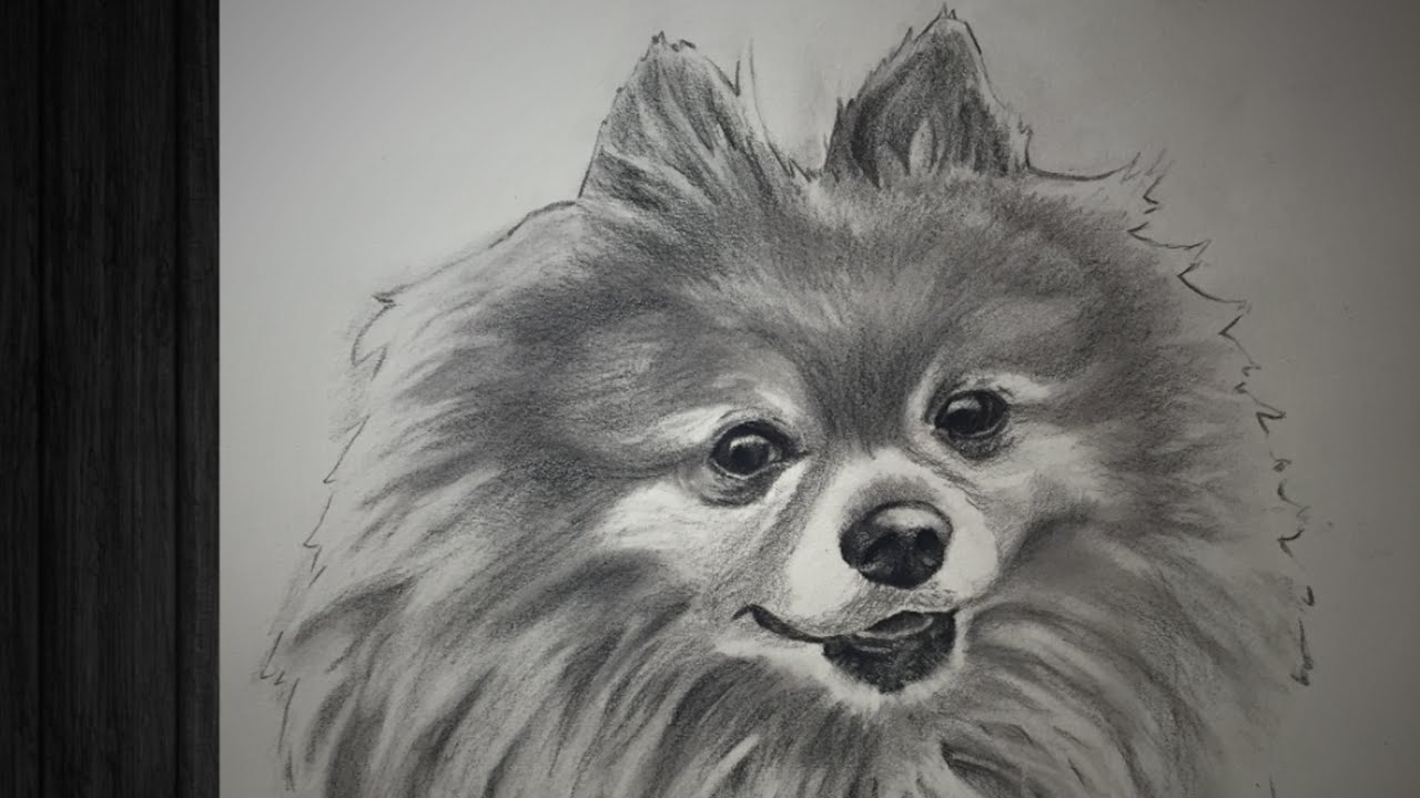 speed drawing dog charcoal pomeranian portrait youtube