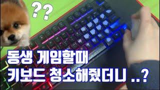 [배쏘 제품소개] TGD 클리너 / 살균세정제 / 전자…