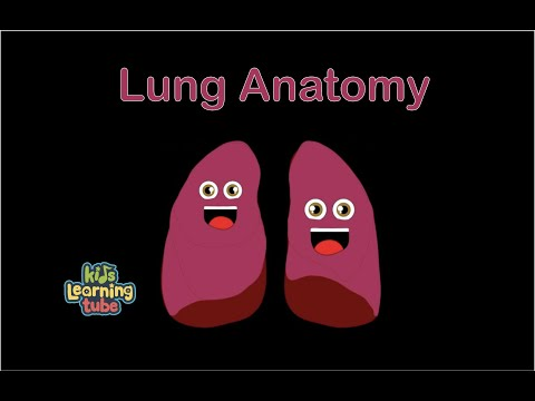 Lungs/Anatomy of Lungs/Lung Song