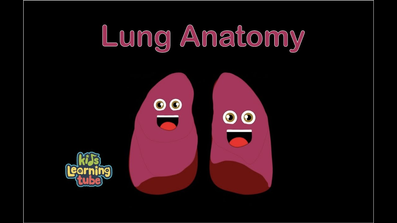 Lungs/Anatomy of Lungs/Lung Song - YouTube