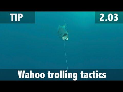 Wahoo Trolling Tactics