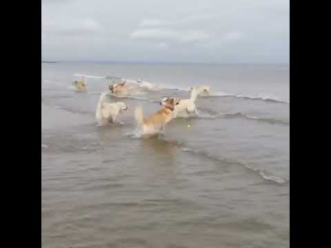Dog Hops into Ocean