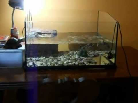 Tartarughiera e tartarughe youtube for Acquario tartarughiera
