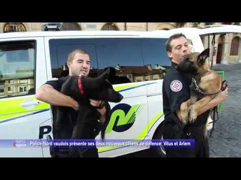 Police Nord vaudois présente ses deux nouveaux chiens de défence: Vitus et Arlem