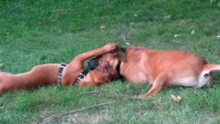 Douge De Bordeaux Vs. South African Boerboel 7