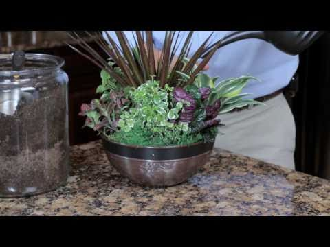 Exotic Angel Plants How To Choose The Best Indoor Plant