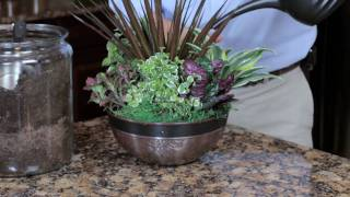 Exotic Angel Plants: How To Create An Indoor Container Garden