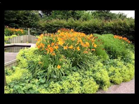 Cмотреть видео онлайн красивые цветники на даче фото
