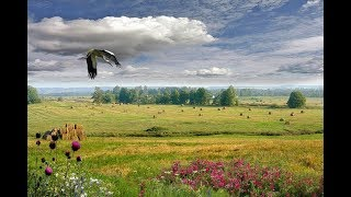 Природа Беларуси/ The nature of Belarus