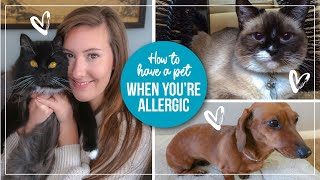 5 Tips for Managing Pet Allergies | How to live with a pet you're allergic to