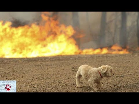 Greece fires 2018 - What you can do to help animals