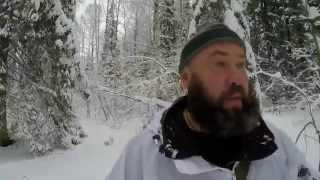 Охота на кабана. Чем кормить кабана зимой. Полезный совет