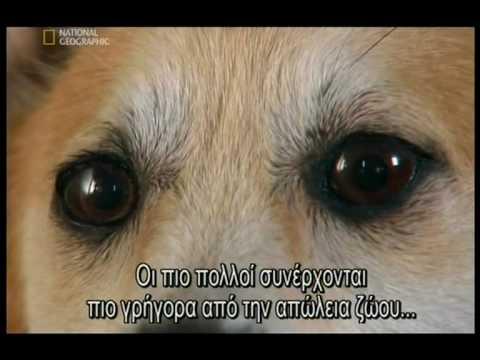 Pet embalming-Ταρίχευση κατοικιδίων