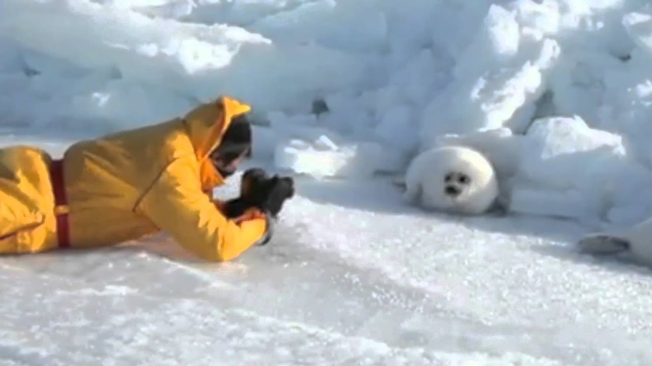 Lazy Harp Seal Has No Job Song By Parry Gripp Youtube