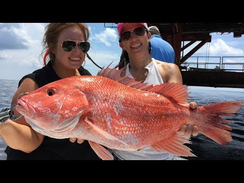 Short run to big snapper, and a surprise fish!