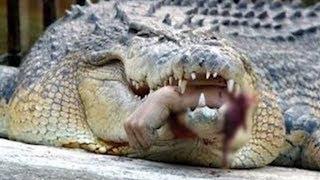 World's Scariest Alligators and Crocodiles