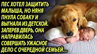 Пёс постоянно лаял на няню и хозяйка прикрепила камеру.  Запись шокировала всех