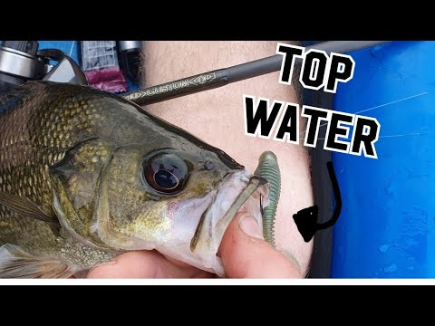 Nepean River Bass Fishing