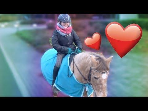 Follow me Around - Mein Pony Schradi ❤   HeyHorse