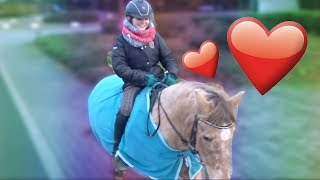 Follow me Around - Mein Pony Schradi ❤ | HeyHorse