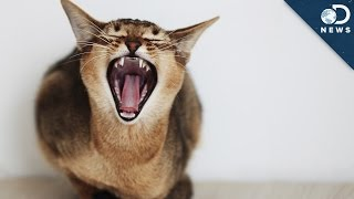Why Your Cute Cat Is Still A Vicious Killer