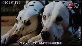 Gambar cover 【101真狗】狗狗发现自己的孩子被偷走后,叫来了全城的动物帮忙寻找