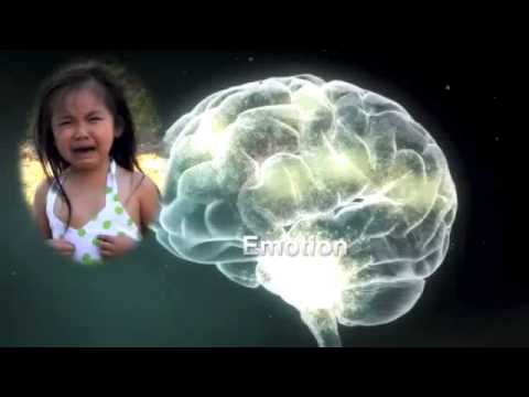 What causes toxic stress in a childs brain?