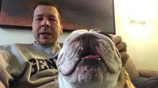 reuben-the-bulldog-thanksgiving-roo