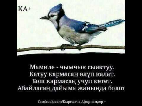 картинка кыргызча создору ноябрьский