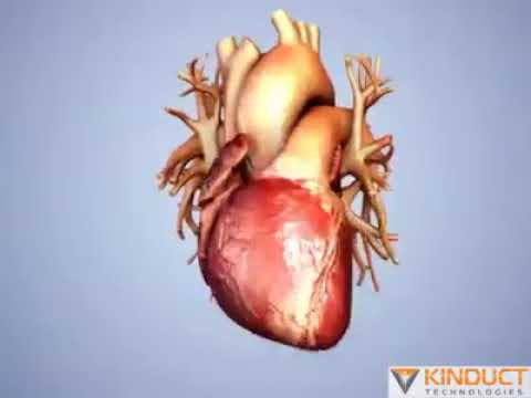 Smoking dramatically increases the risk of cardiovascular disease