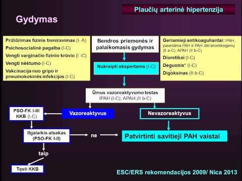 PSO dėl hipertenzijos gydymo auksinių ūsų naudojimas hipertenzijai gydyti