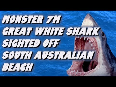 Monster 7m Great White Shark Sighted Off Australian Beach.