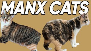 5 Marvelous Facts About Manx Cats