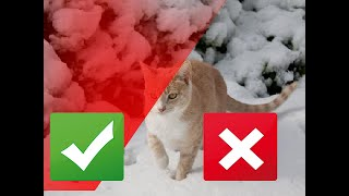 5 Ways to Keep Your Cat Active this Winter