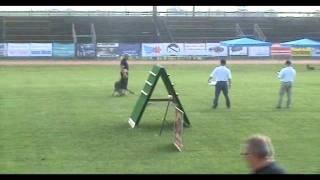 Jabina Gustav Obedience Masters World Dog Sport Tournament