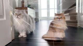 Cats Try The Invisible Challenge