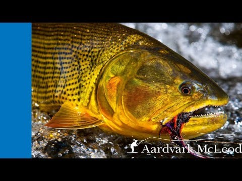 Tsimane 3X - Fly Fishing For Golden Dorado In Bolivia