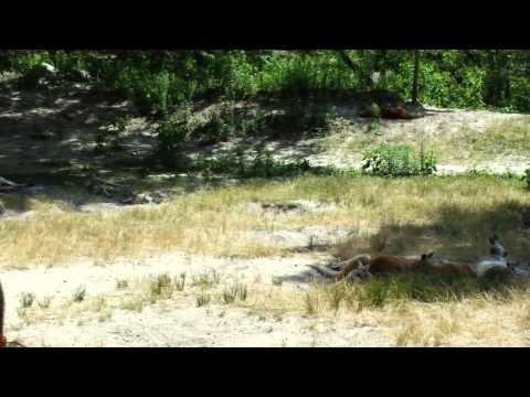 Six Flags Safari Off Road Adventure - (Part 7)