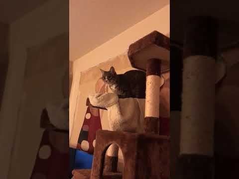 Cat.exe Has Stopped Working