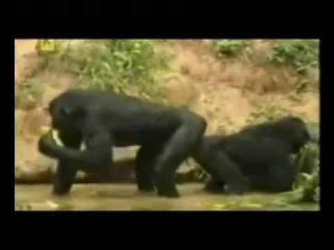 Sxs of Africa.2. thumbnail