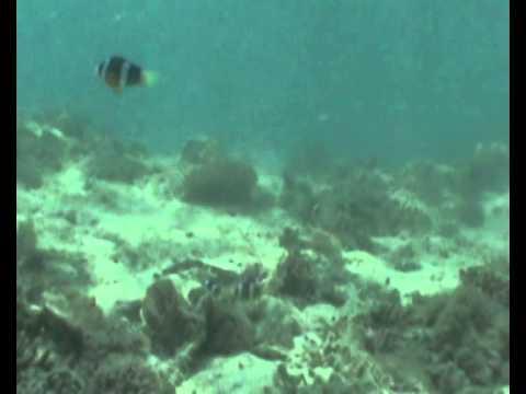 Clownfish Sounds