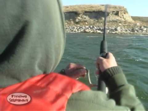 Outstanding Walleye action on Rafferty Reservoir on Fishing Saskatchewan