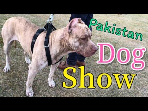 Dog Show in Pakistan (Vlog#4) | All Breed Dog Show at Ayub Park ,Rawalpindi 2018