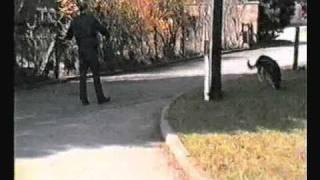 Police Dog Training,tracking, Catching & Biting A Burglar