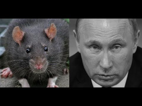"""""""Крысиное царство"""""""
