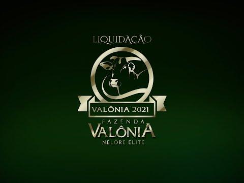 Lote 38   Elegante FIV da Valônia   JAA 6372 Copy
