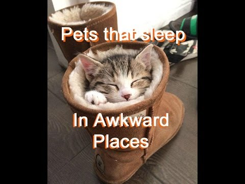 17 Dogs and Cats that sleep in awkward places - pics