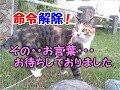 猫が犬みたいに人の言うことを聞いたり聞かなくなったりする時-かわいい猫なのに犬として育てられた猫20
